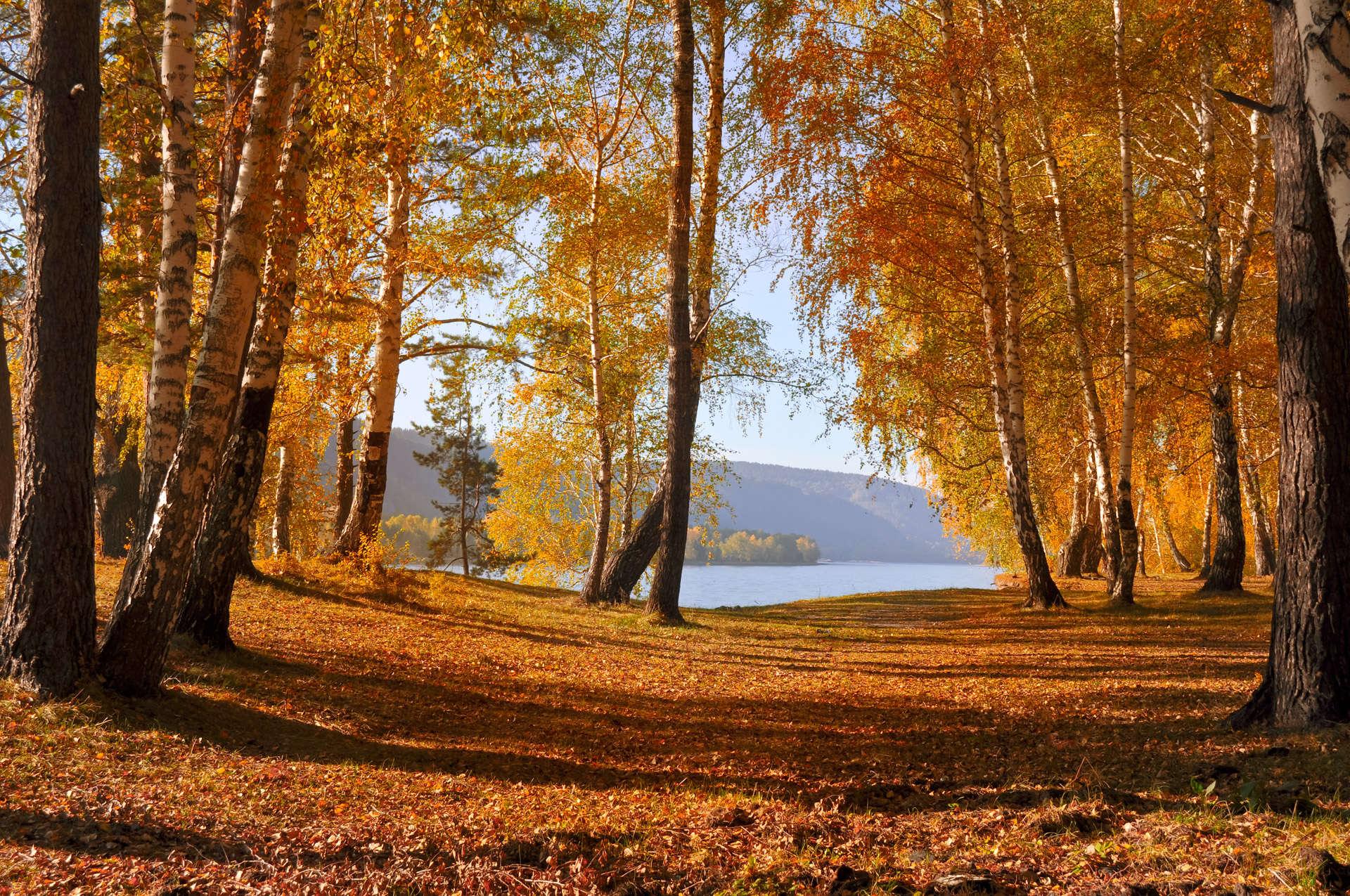 StockKosh-forest-autumn-forest-1351265582Bf1
